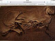 Fossilsdundundun