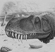Baby Ceratosaurus Head