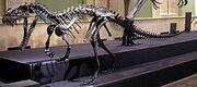Ceratosaurus Body