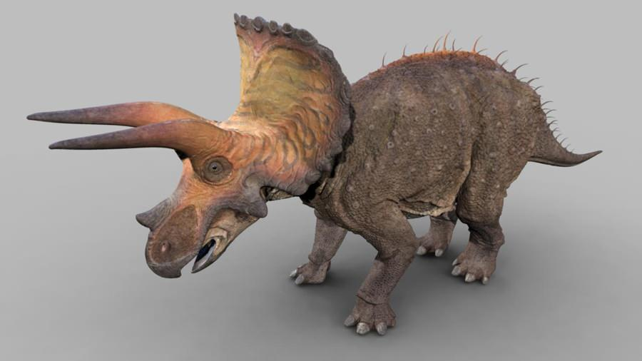 triceratops dinosaur revolution wiki fandom powered by wikia