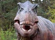 Rex head