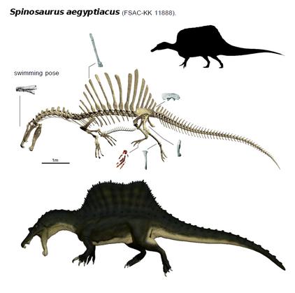 Spinosaurus 2014 by thedinorocker-d80yhs5