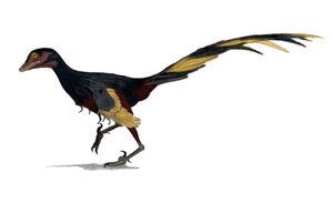 Jinfengopteryx wiki