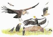 Vultures of la brea by diegooa dcgfufg-pre
