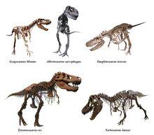 Tyrannosauridae-0