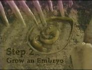 Step 2 Grow an Embryo