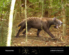 Thylacosmilus1.jpg