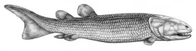 Laccognathus by biarmosuchus-d5sy23m