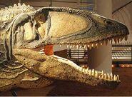 Carcharodontosaurushead