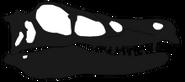 Linheraptor Skull