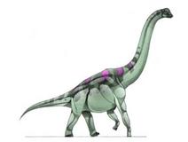 JPI Atlasaurus