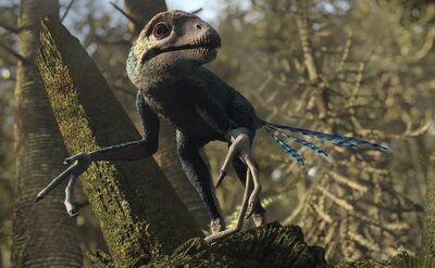Epidexipteryx 1