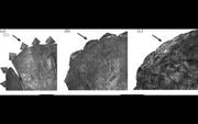Triceratops epoccipitals.jpg