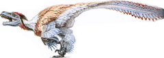 Dromaeosaurus.png