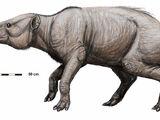 Titanohyrax