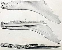 220px-Labrosaurus