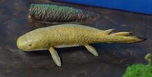 Dipnorhynchus