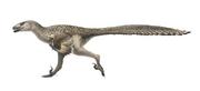 1280px-Dromaeosaurus Restoration.png