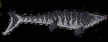 Platecarpus tympaniticus by themorlock-d92xflx