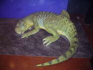 Psittacosaurus NHM