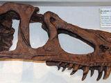 Marshosaurus