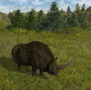 603px-Erasmotherium