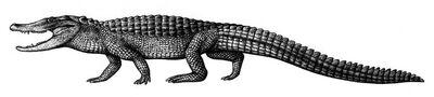 Brachychampsa by biarmosuchus-d5tuczk