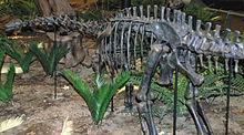 Apatosaurus louisae juvenile sauropod dinosaur (Morrison Formation, Upper Jurassic; Sheep Creek, Albany County, southeastern Wyoming, USA)