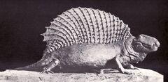Neosaurus cynodus.jpg