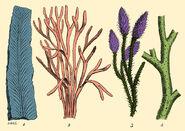 Silurian-plants-science-source