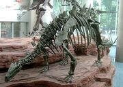 Tuojiangosaurus skeleton