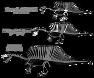Spinosaurus skeleton bipedal2