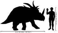 Human-styracosaurus size comparison