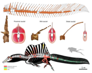 Spinosaurus new paddle-like tail fossil 2020