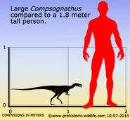 Compsognathus-size
