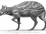 Dorcatherium