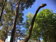 Diplodocus-boraszoo
