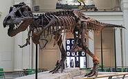 220px-Sues skeleton