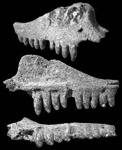250px-Suchonosaurus