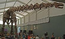 Museum koenig ausstellung 2010
