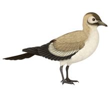 Songlingornis