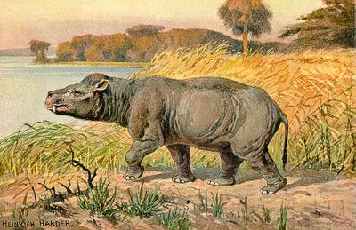 Harder Coryphodon