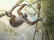 Giant Sloth Lemur and Eastern Lesser Bamboo Lemur