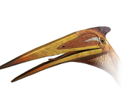 Pterosaurhead