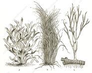 C0333780-Devonian Plants