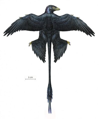 File:Microraptor-reconstruction.jpg