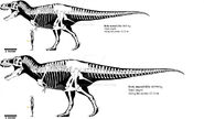 Tyrannosaurus rex and vastatosaurus rex size by mark0731 dc7mnze-pre