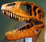 Carcharodontosaurus (1)