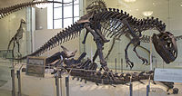 200px-AMNH Allosaurus