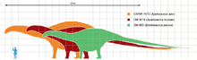 Apatosaurus scale mmartyniuk wiki